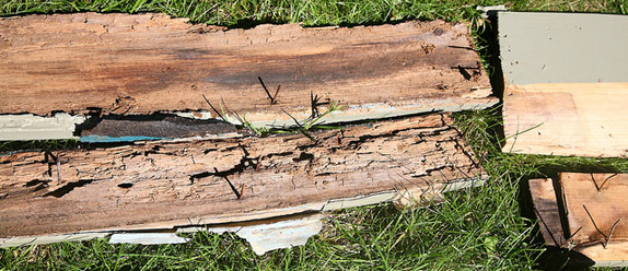 Rotten Wood