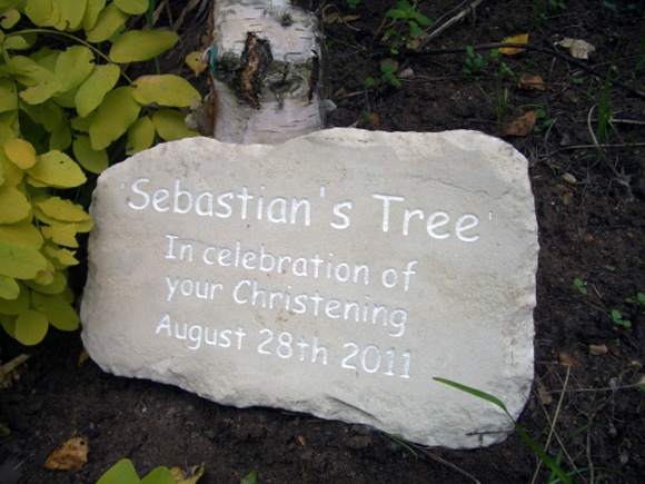 sebastians tree